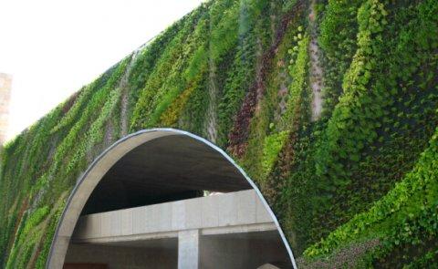 垂直绿化植物的展现方式